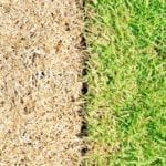 5 Things That Might be Killing Your Lawn | Hittle Landscaping
