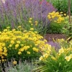 Low Maintenance Plants for Summer | Hittle Landscaping