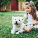 Pet-Friendly Backyards | Hittle Landscaping
