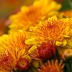 Brighten Your Fall Garden | Hittle Landscaping