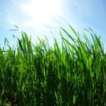 Pre Summer Lawn Prep   Hittle Landscaping