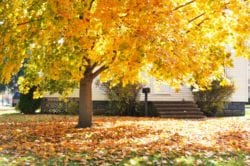 When to Start Preparing for Fall | Hittle Landscaping