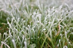 Preparing your lawn for winter | Hittle Landscaping