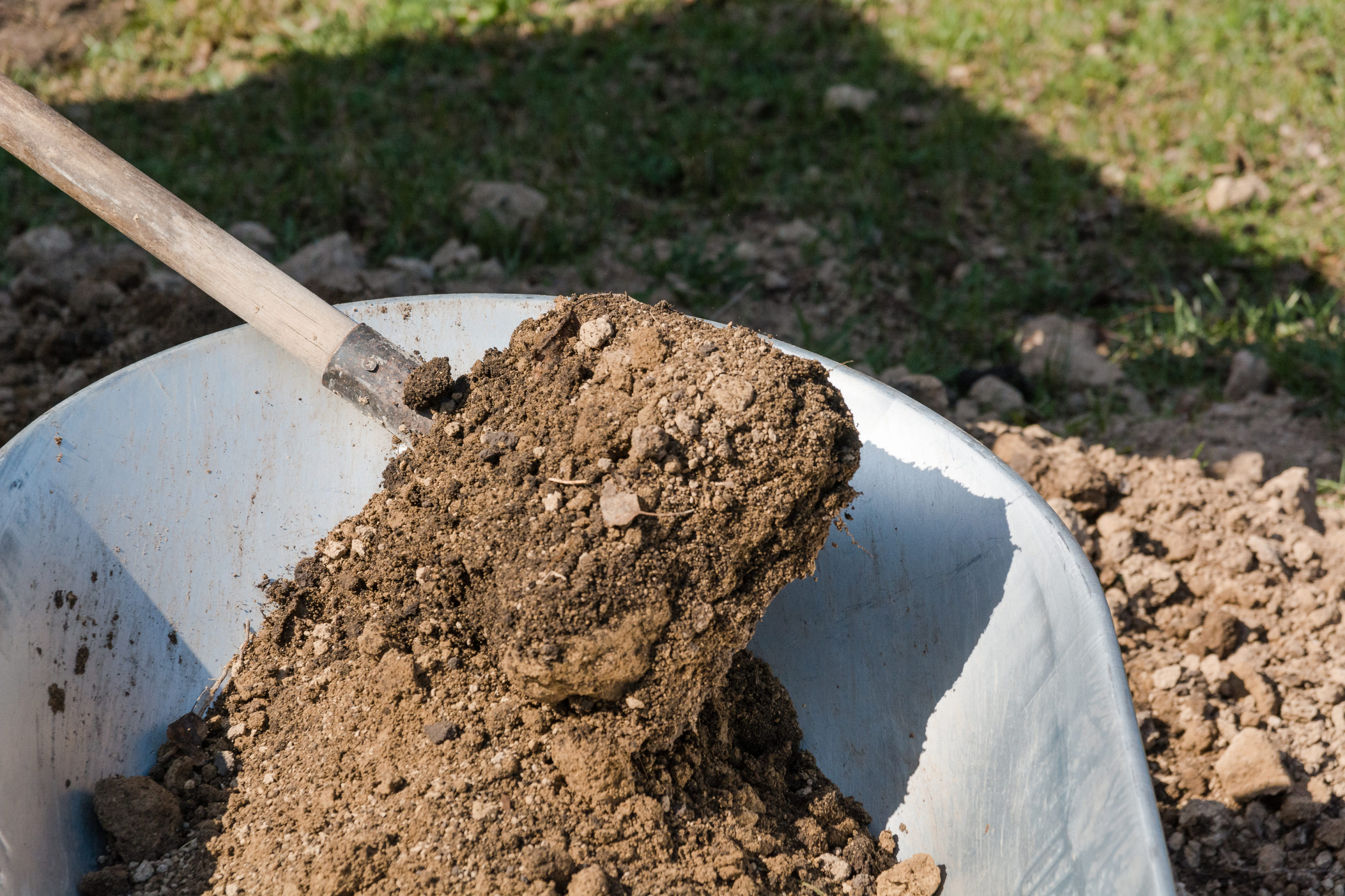 Why you should have your yard fertilized in the Winter | Hittle Landscaping