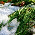 When to prepare your lawn for spring | Hittle Landscaping