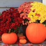 Best flowers for fall | Hittle Landscaping