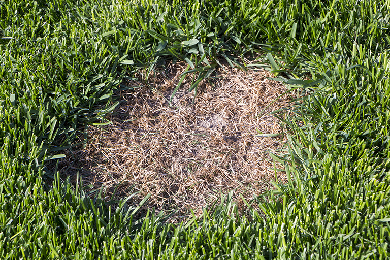 Brown Patch in Lawn | Landscaping Tips to Avoid Brown Grass | Hittle Landscaping