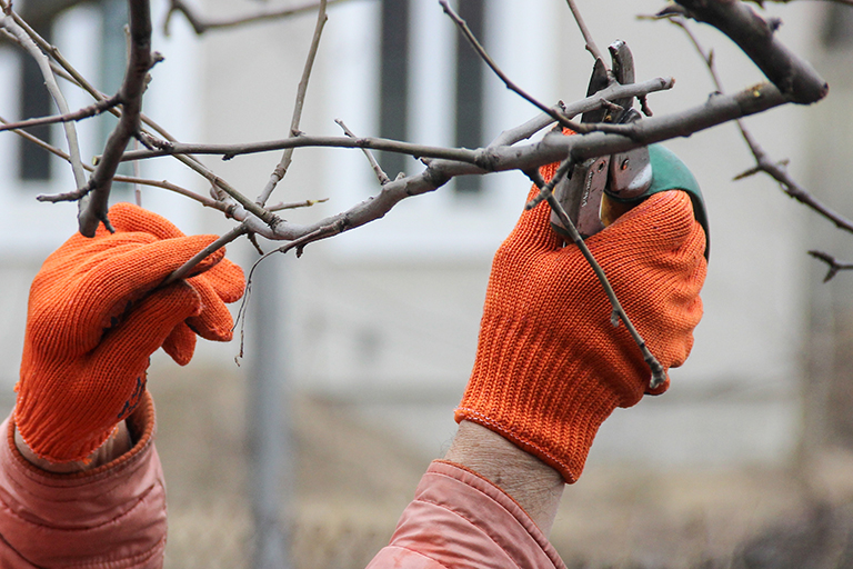 Hands in orange gloves prune winter branch | Dormant Tree Pruning for Modern Garden Design | Hittle Landscaping