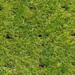 Green grass lawn with aeration marks | 4 Commercial Landscape Musts This Winter | Hittle Landscape