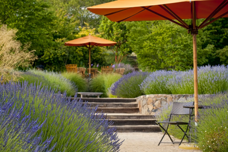 backyard with lavender plants and orange umbrellas | Landscaping Improvements and HELOCs | Hittle Landscaping