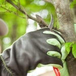 pruning trees | 5 Commercial Landscape Contract Musts | Hittle Landscaping